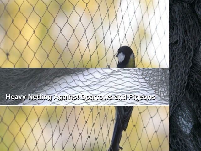 Heavy Netting Against Sparrows and Pigeons